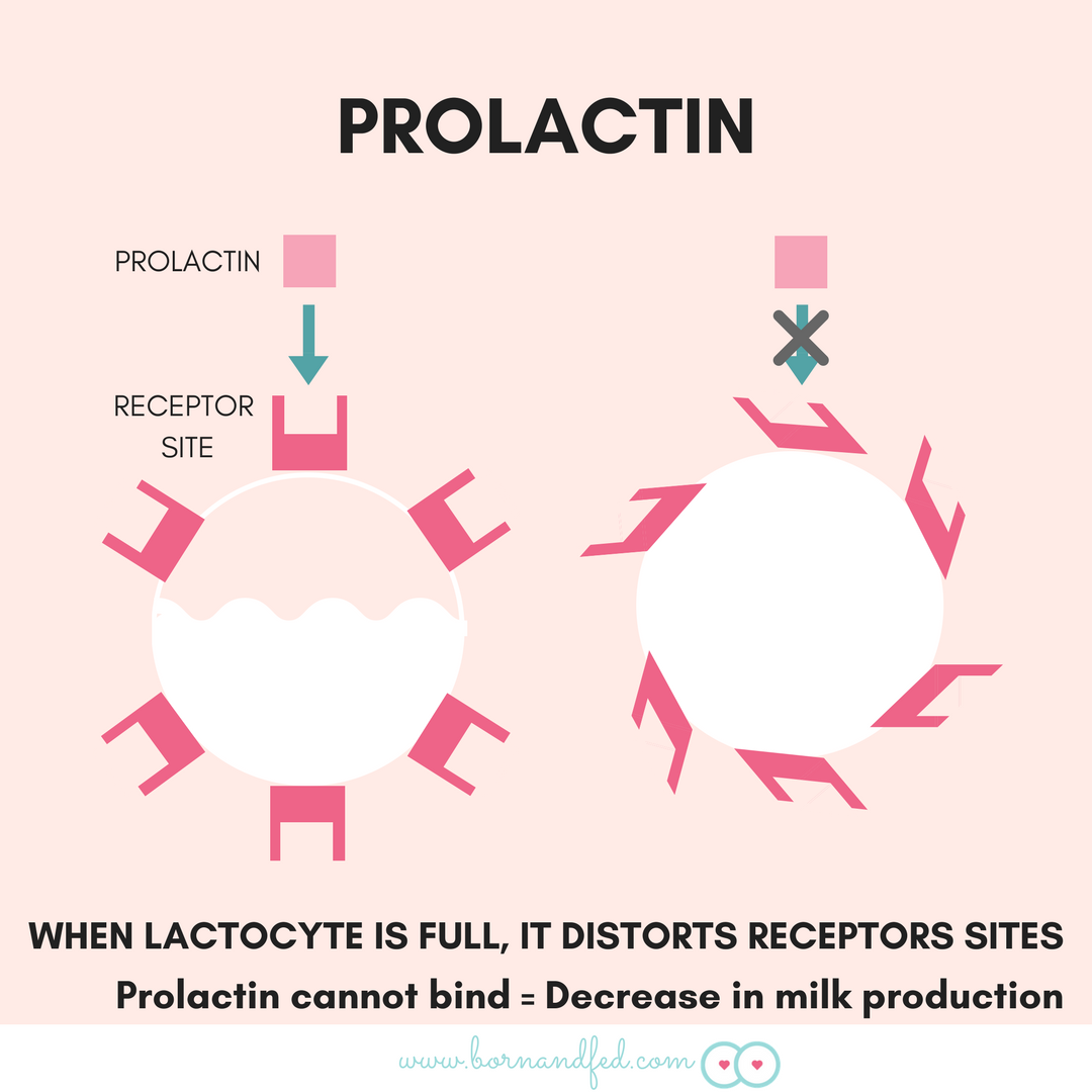 #bornandfed- Prolactin Milk Supply